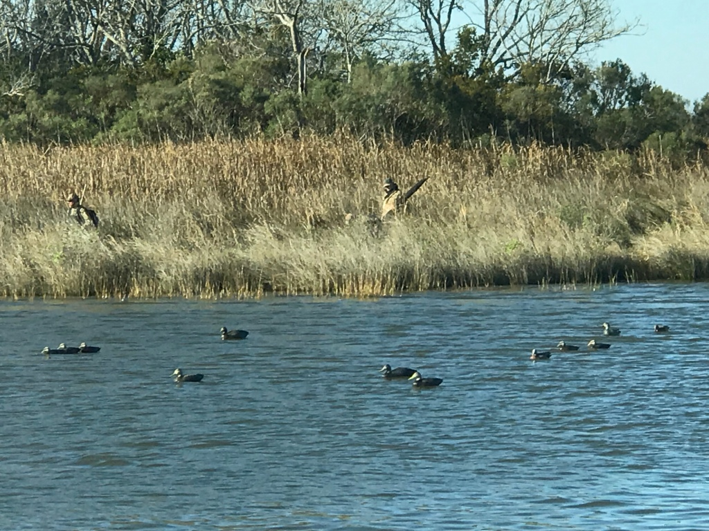 Duck Hunting with Decoys