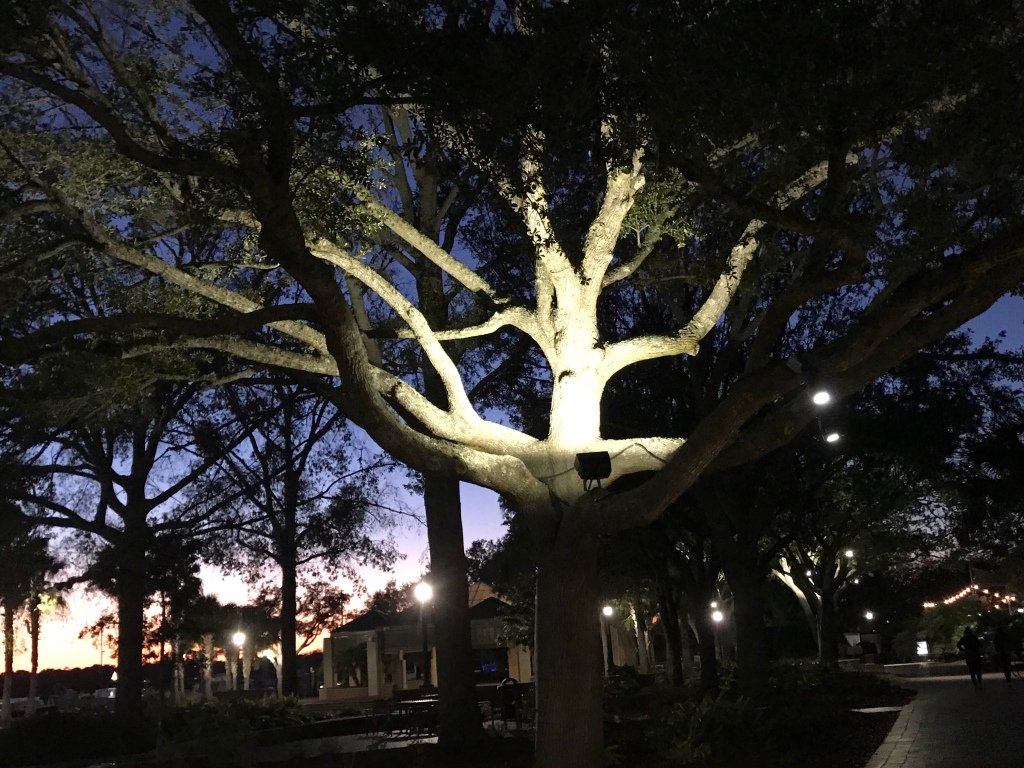 Tree in Beaufort SC