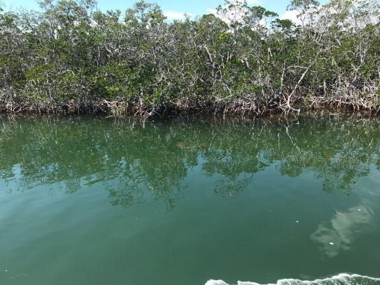 4b Mangrove 1