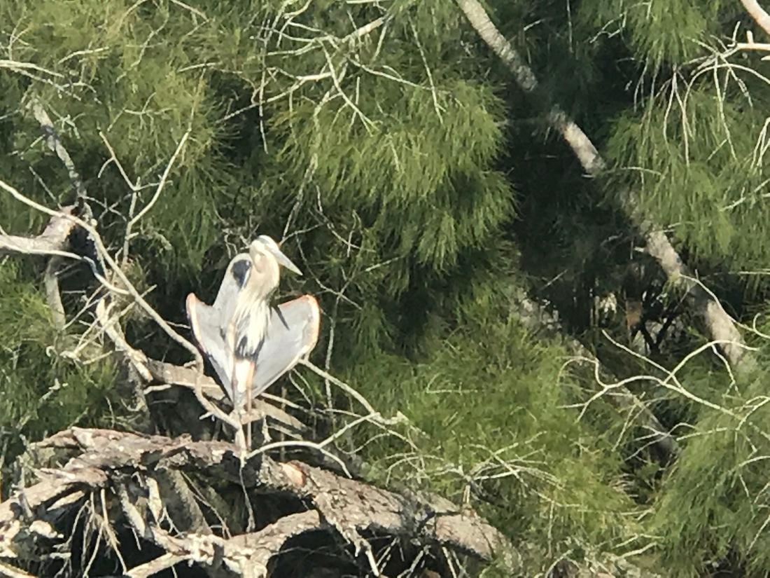 Haulover Canal Flasher Bird