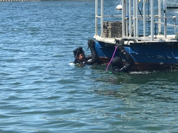 Mooring 9 Divers