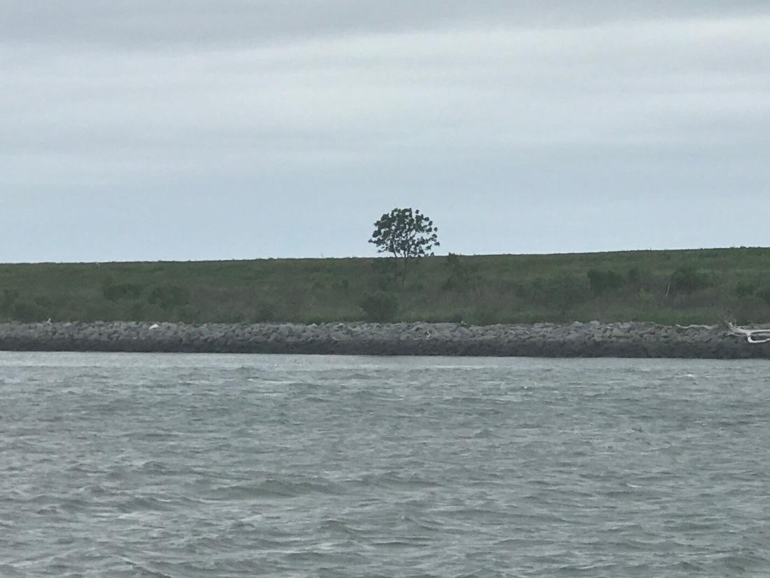 Savannah River Tree